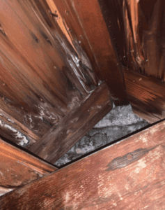 Mold in an attic caused by condensation.