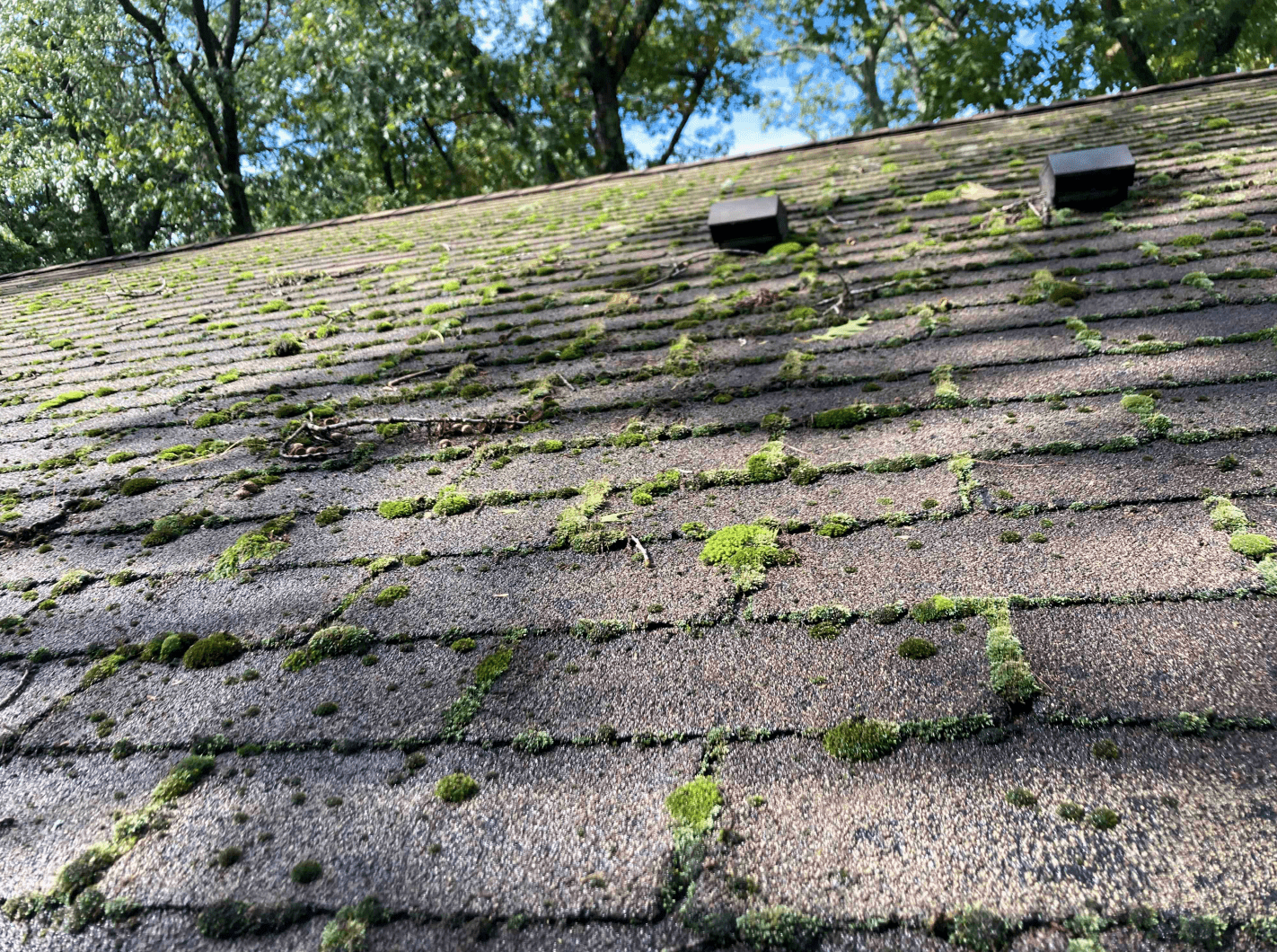 Old asphalt shingles with algae growth. A top cause of leaks.