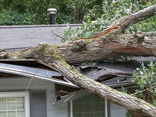Storm Damage from Downed Tree